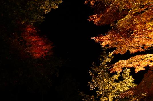 紅葉 伊奈ヶ湖 ライトアップ 見上げる