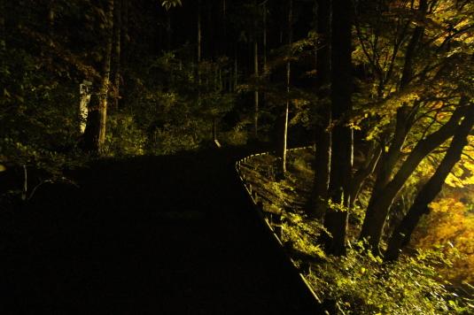紅葉 伊奈ヶ湖 ライトアップ 遊歩道