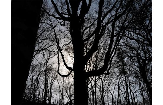 巨木のシルエット
