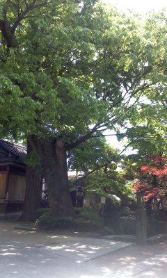 20120513.jpg