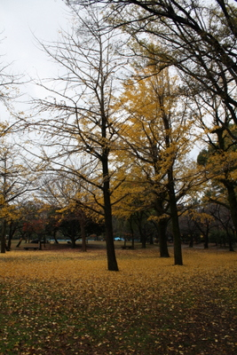 20121126 絨毯