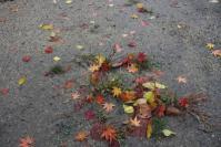 20121126 落ち葉いろいろ
