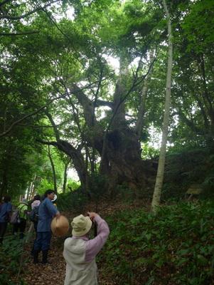 不思議な樹