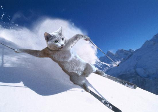 みどりスキー
