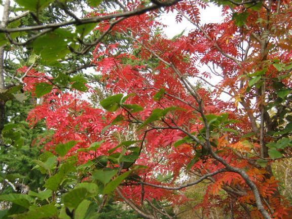 fujiyoshida131006-120.jpg