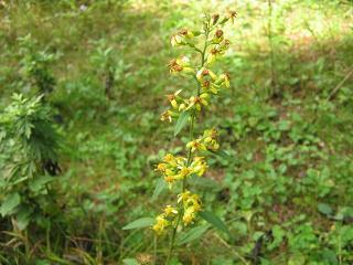 fujiyoshida131006-208.jpg