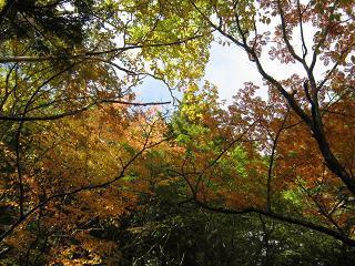 fujiyoshida131006-240.jpg