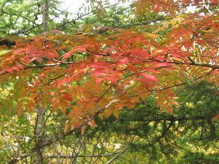 fujiyoshida131006-252.jpg