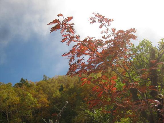 fujiyoshida131006-262.jpg