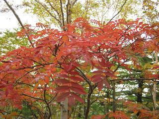 fujiyoshida131006-276.jpg