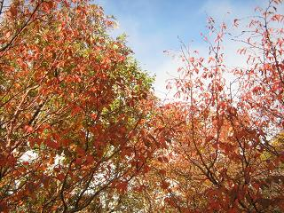 fujiyoshida131006-284.jpg