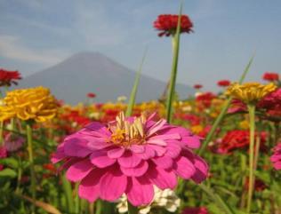 hananomiyako130816-207.jpg