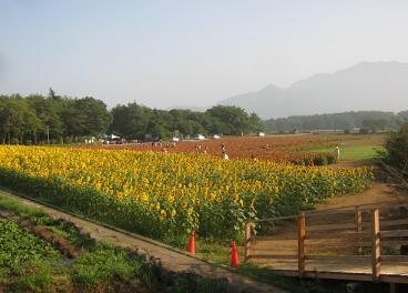 hananomiyako130816-208.jpg