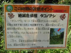 kitamoto130901-103.jpg