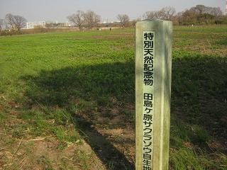 sakurakouen130317-206.jpg