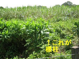 sakurasou130728-201.jpg