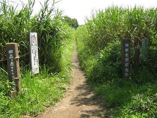 sakurasou130728-211.jpg