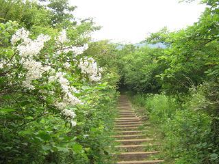 yamanakako130706-233.jpg