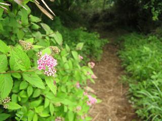 yamanakako130706-264.jpg