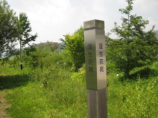 yamanakako130816-290.jpg