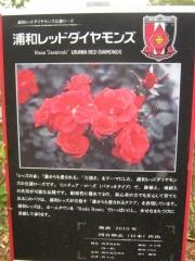yono131110-102.jpg