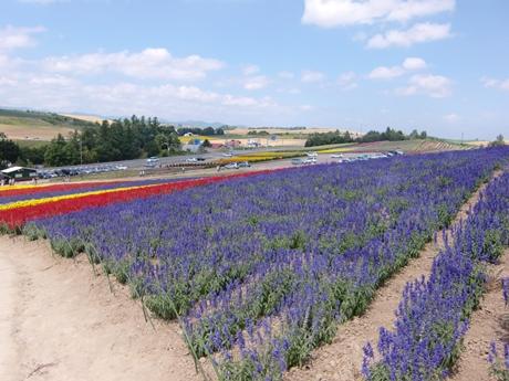 ラベンダーの他、数10種類の花々を栽培しています。