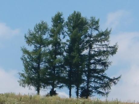 7本の木!
