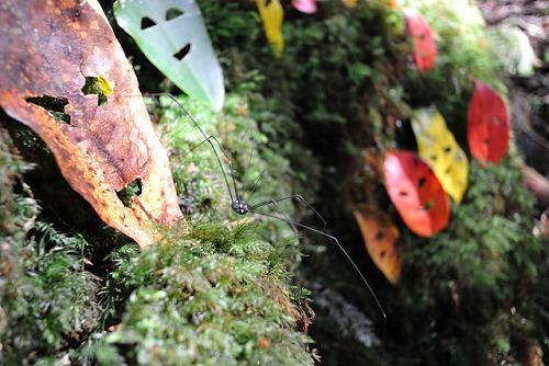 ザトウムシとカラフルな葉っぱ達