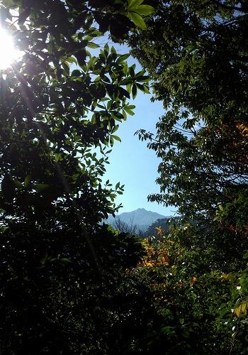 林冠の間から望む宮之浦岳