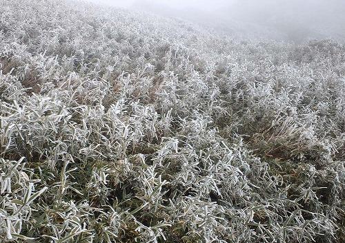 宮之浦岳山頂付近霧氷