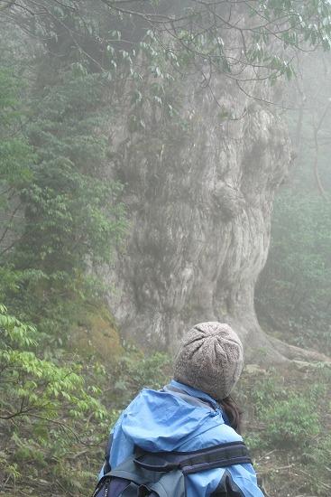 縄文杉とご対面