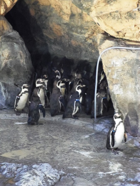 IMGP0643ペンギン