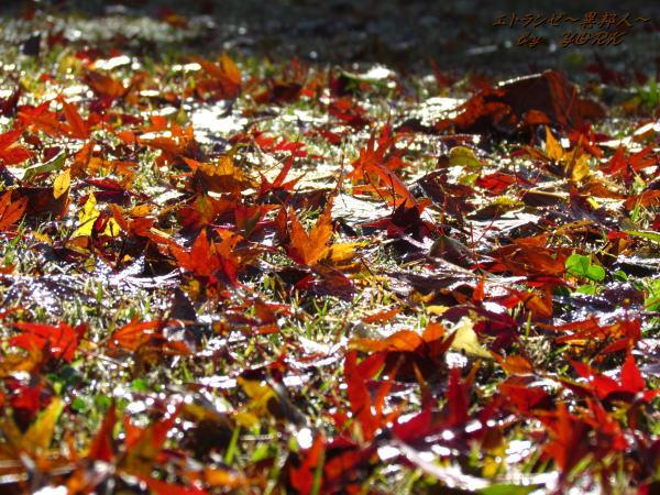 5217紅葉の落ち葉