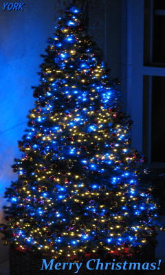 携帯用 0090クリスマスツリー240×400