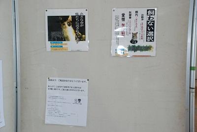 DSC_0036_20120611221952.jpg