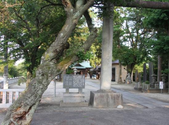 ogawasoga02.jpg