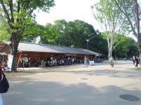 上野公園スタバ