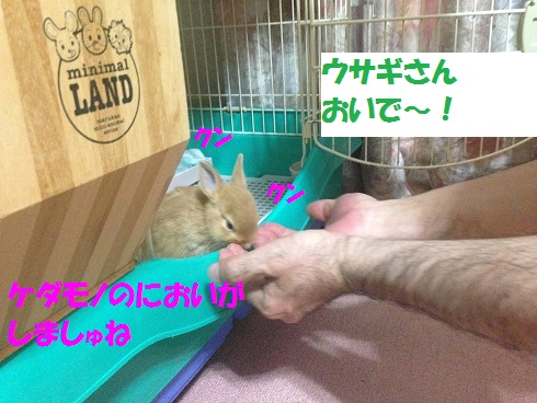 IMG_1332.ケダモノ