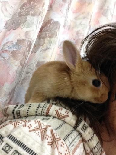 IMG_1780.肩乗りウサギ