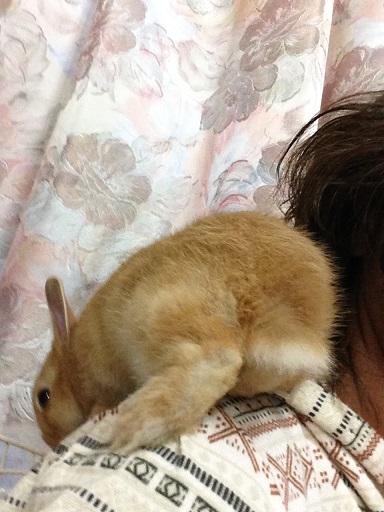 IMG_1776.肩乗りウサギ