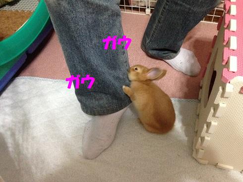 IMG_2031.ケダモノ