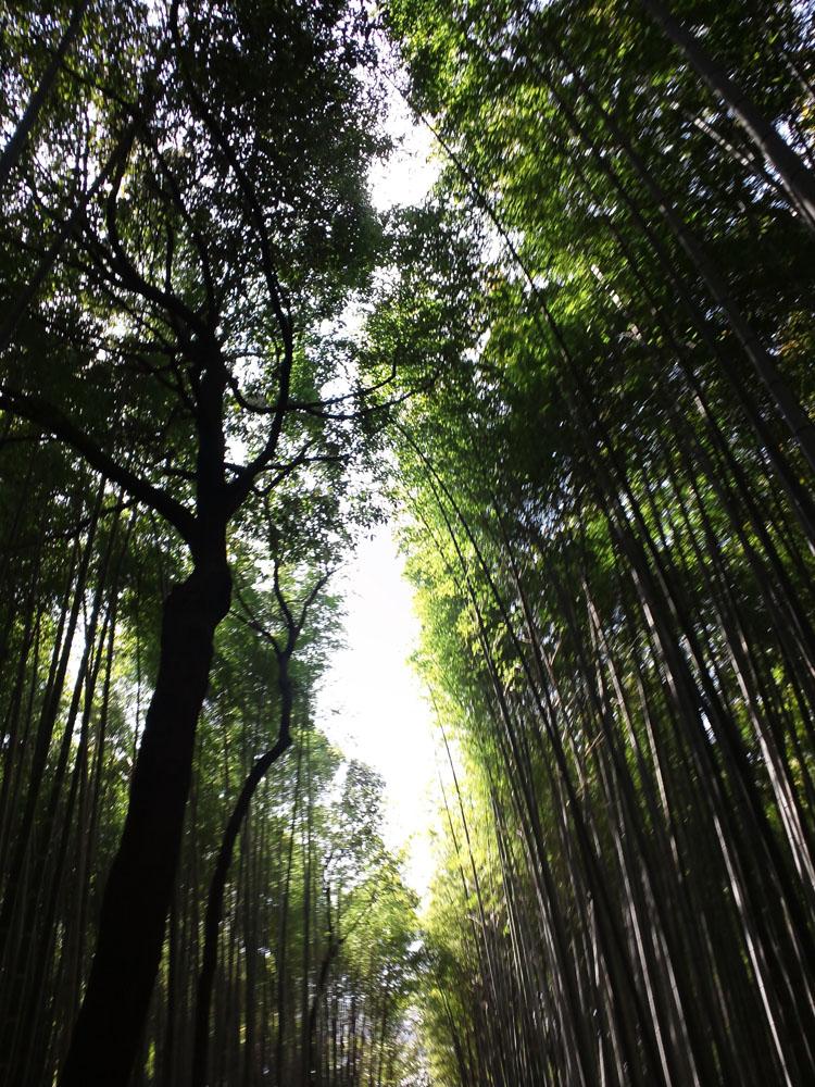lostheaven_kyouto_arashiyama