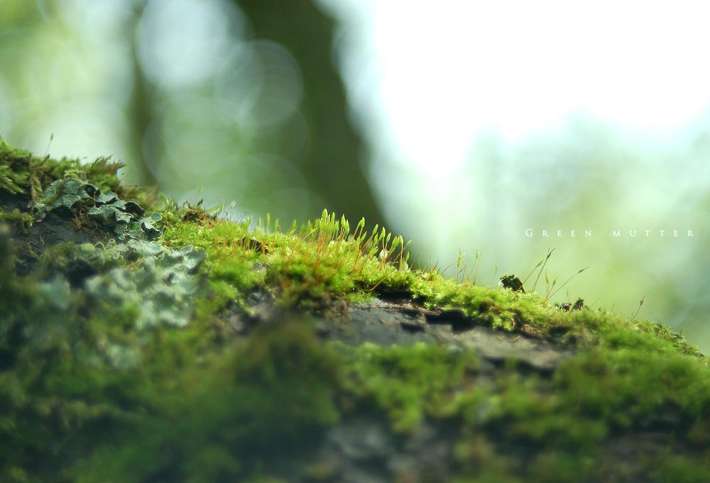 Green_mutter.jpg