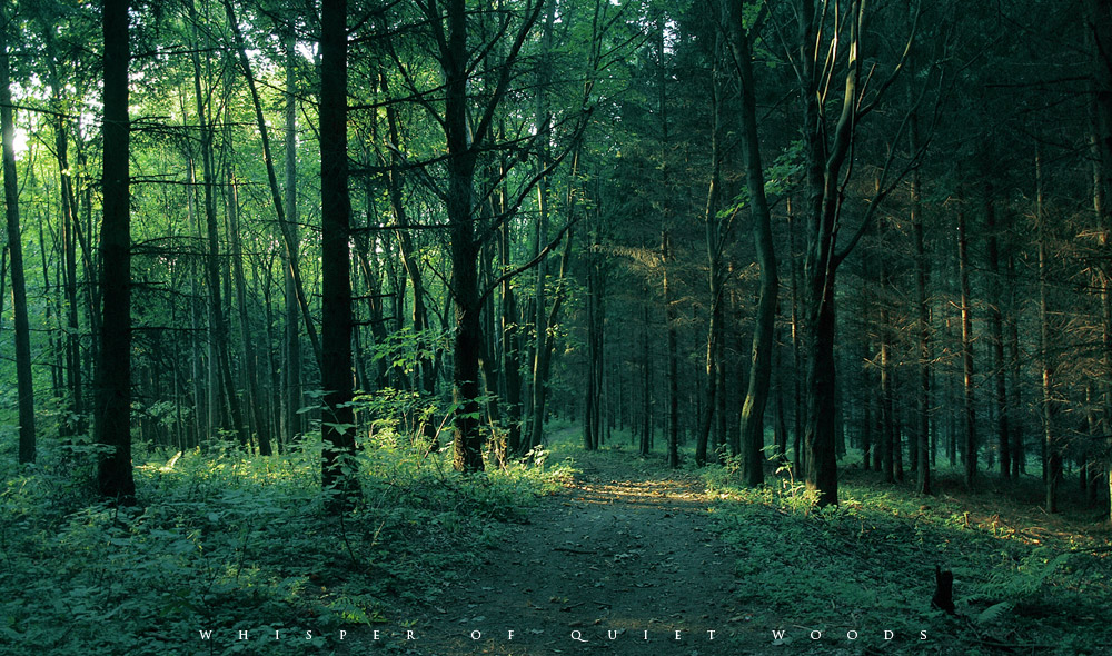 forest00003.jpg