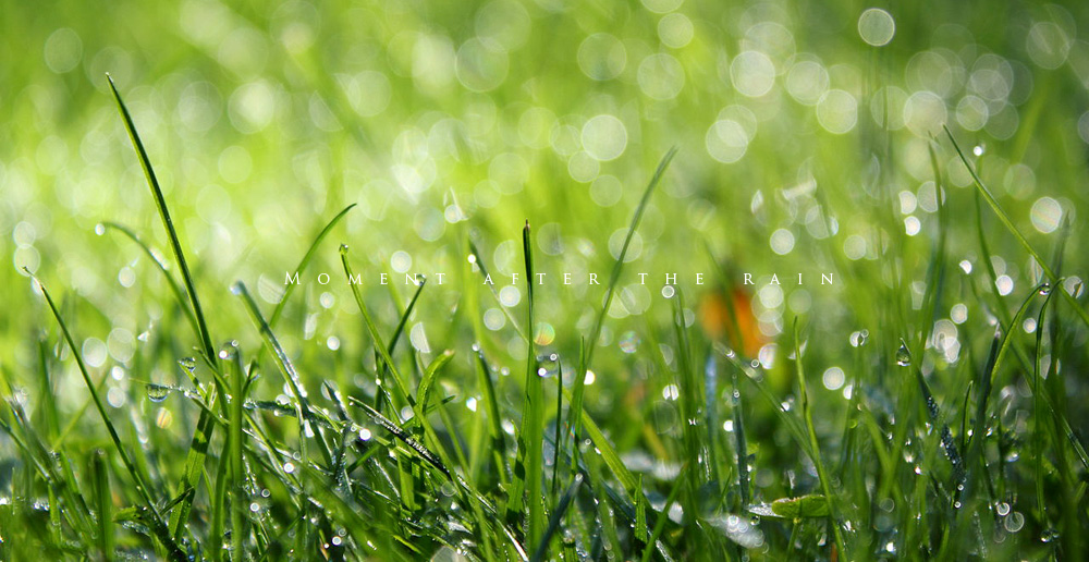 rain003.jpg
