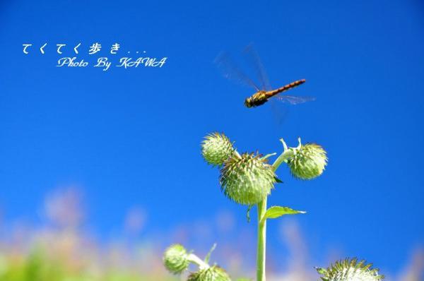 10天狗高原13.08.28