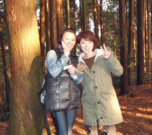 檜林の夕暮れ