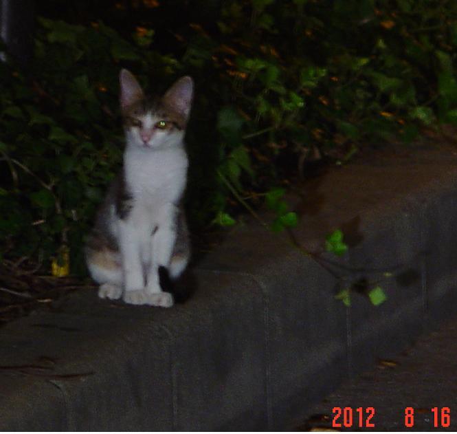 ハイアットの猫