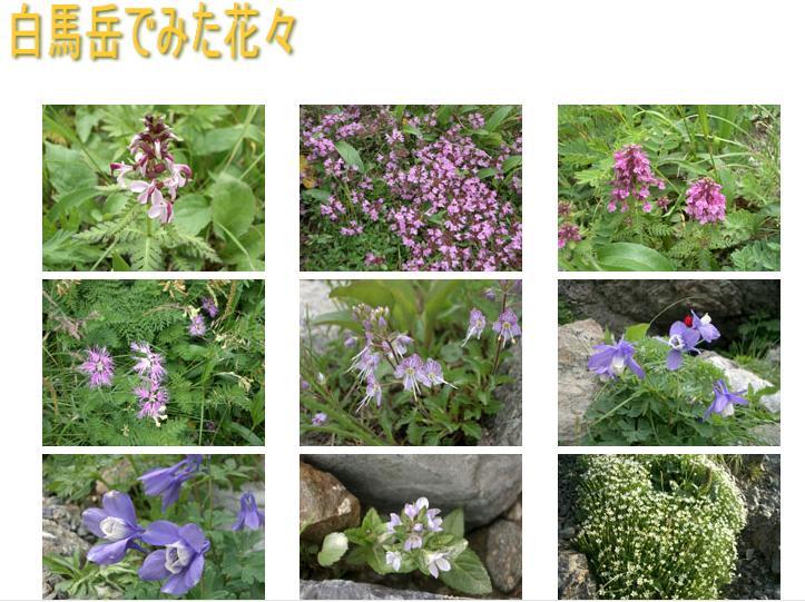 hakuba_flower.jpg