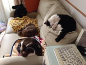 fc2blog_20121101121013b6a.jpg